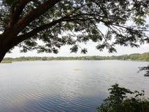 A água relaxa parou a lagoa das árvores imagem de stock
