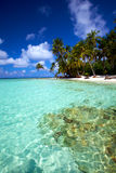 Água tropical bonita! Imagem de Stock