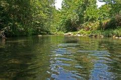 Águas calmas entre as árvores Fotografia de Stock