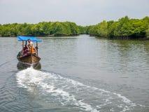 Águas de Carry Tourists Around Mangrove Forest do barco fotografia de stock