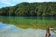 Águas desobstruídas e árvores sinked Foto de Stock