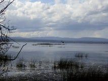 Águas do pântano Fotos de Stock