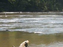 Águas do rio Imagens de Stock Royalty Free