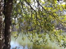 Águas protegidas Imagem de Stock Royalty Free