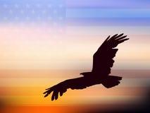 águia Foto de Stock