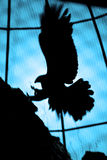 Águia abstrata Imagem de Stock Royalty Free