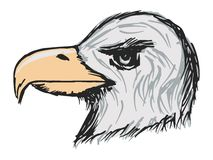 Águia americana americana Fotos de Stock Royalty Free