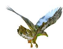 Águia americana no backgroun branco ilustração stock