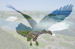 Águia americana no fundo de Niagara Falls imagens de stock