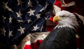 Águia calva americana com bandeira foto de stock royalty free