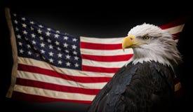 Águia calva americana com bandeira fotografia de stock