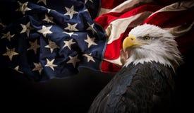 Águia calva americana com bandeira fotos de stock royalty free
