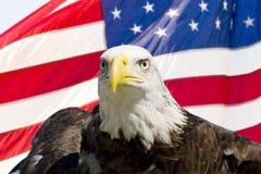 Águia calva com bandeira Imagens de Stock