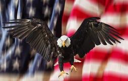 Águia calva com bandeira americana fotografia de stock