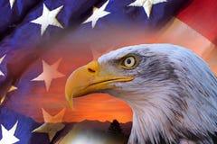 Águia calva e bandeira americanas Foto de Stock