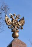 águia Dobro-dirigida Fotos de Stock Royalty Free