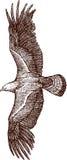 Águia dourada ilustração royalty free