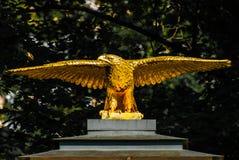 Águia dourada Foto de Stock