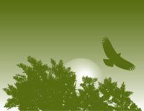 Águia e árvore   ilustração stock