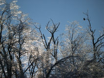 Águia e gelo Imagens de Stock
