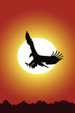 Águia e por do sol Imagens de Stock
