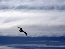 A águia subindo. fotos de stock