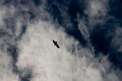 Águia subindo Fotografia de Stock