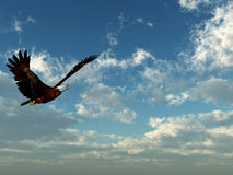 Águila Fotos de archivo libres de regalías