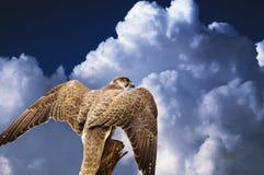 Águila abstracta del halcón bajo el cielo Foto de archivo
