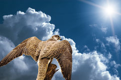 Águila abstracta del halcón bajo el cielo Fotografía de archivo libre de regalías