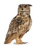 Águila-Buho eurasiático, bubón del bubón fotografía de archivo libre de regalías