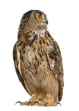 Águila-Buho eurasiático, bubón del bubón Imagen de archivo libre de regalías