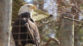 Águila calva metrajes