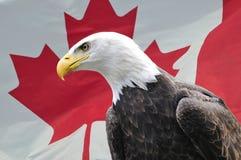 Águila calva delante del indicador canadiense fotos de archivo