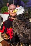 Águila calva hermosa Foto de archivo