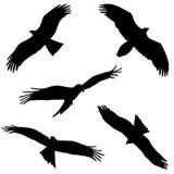 Águila. Cinco diferentes. stock de ilustración