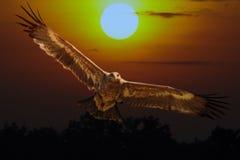 Águila de la estepa Imagen de archivo libre de regalías