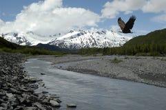 Águila de la montaña Fotografía de archivo libre de regalías