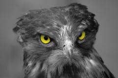 Águila de la serpiente Imágenes de archivo libres de regalías
