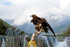 Águila de oro Imágenes de archivo libres de regalías