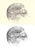 Águila de oro de la cabeza del bosquejo del lápiz Foto de archivo libre de regalías