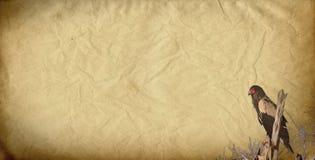 Águila del dibujo más facier en una rama stock de ilustración