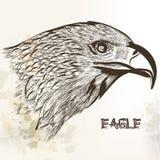 Águila dibujada mano del vector Imagen de archivo