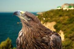 águila en un paisaje marino del fondo Fotografía de archivo libre de regalías