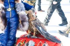 Águila entrenada que se sienta en las pieles En el fondo Fotografía de archivo