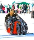 Águila entrenada que se sienta en las pieles En el fondo Imagen de archivo libre de regalías