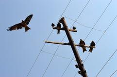 águilas Fotografía de archivo