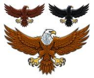 águilas Imagenes de archivo