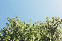 Álamo abajo y el árbol contra el cielo Imágenes de archivo libres de regalías