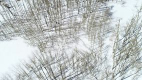 Álamos tembloses altos desde arriba con las sombras echadas en la nieve almacen de metraje de vídeo